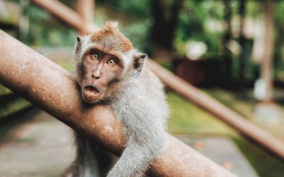 Top 4 Reasons Young People Believe in Evolution – Dan Biddle
