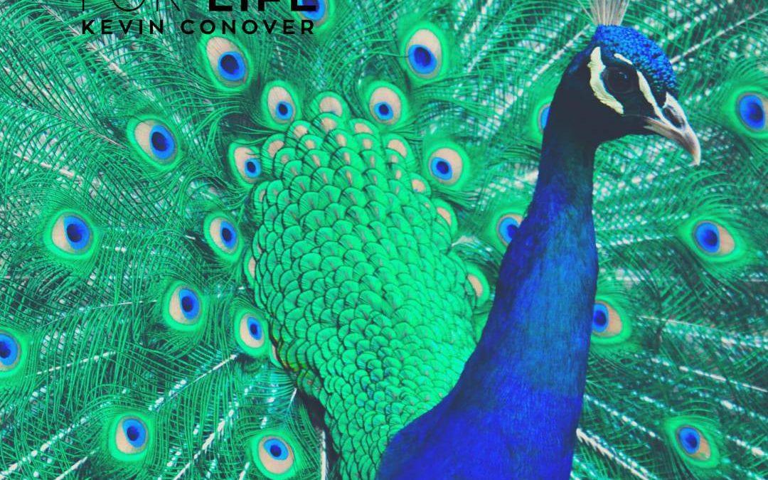 The Peacock's Amazing Optical Illusion