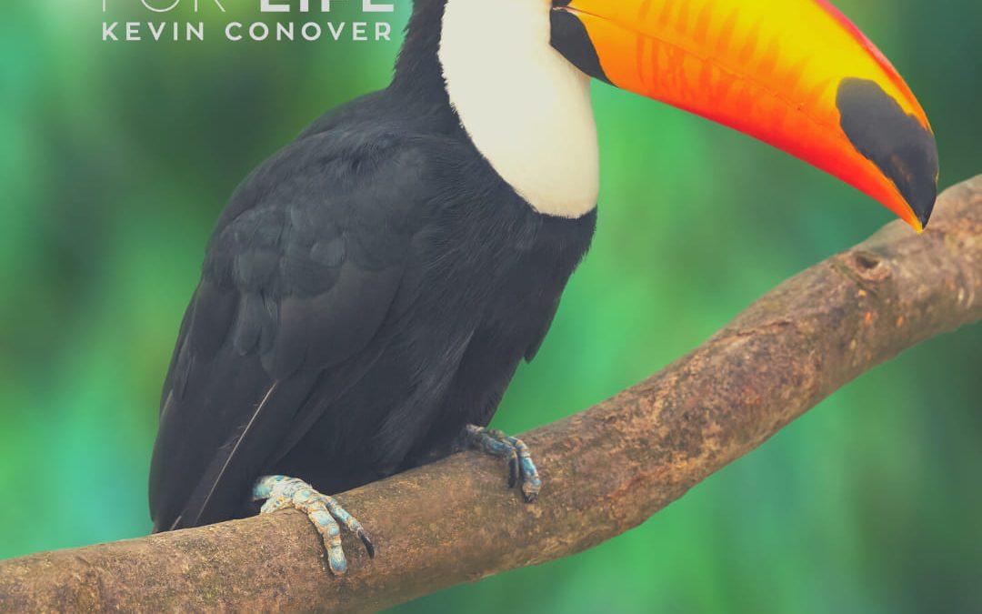 The Toucan's Beak