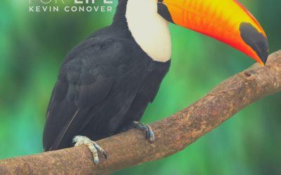The Toucan's Beak