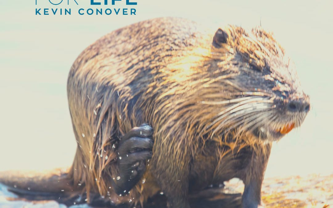The Beaver's Adaptations