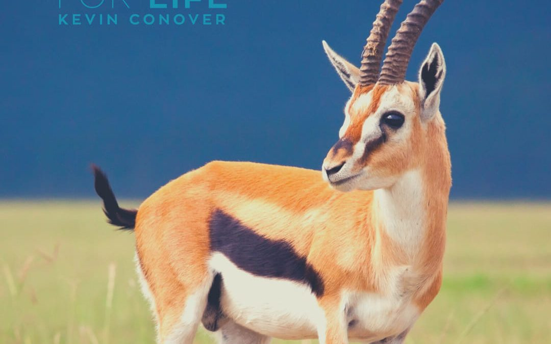 The Gazelle's Built-In Radiator