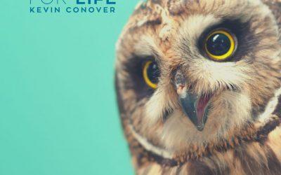 Owls: Designed for the Dark