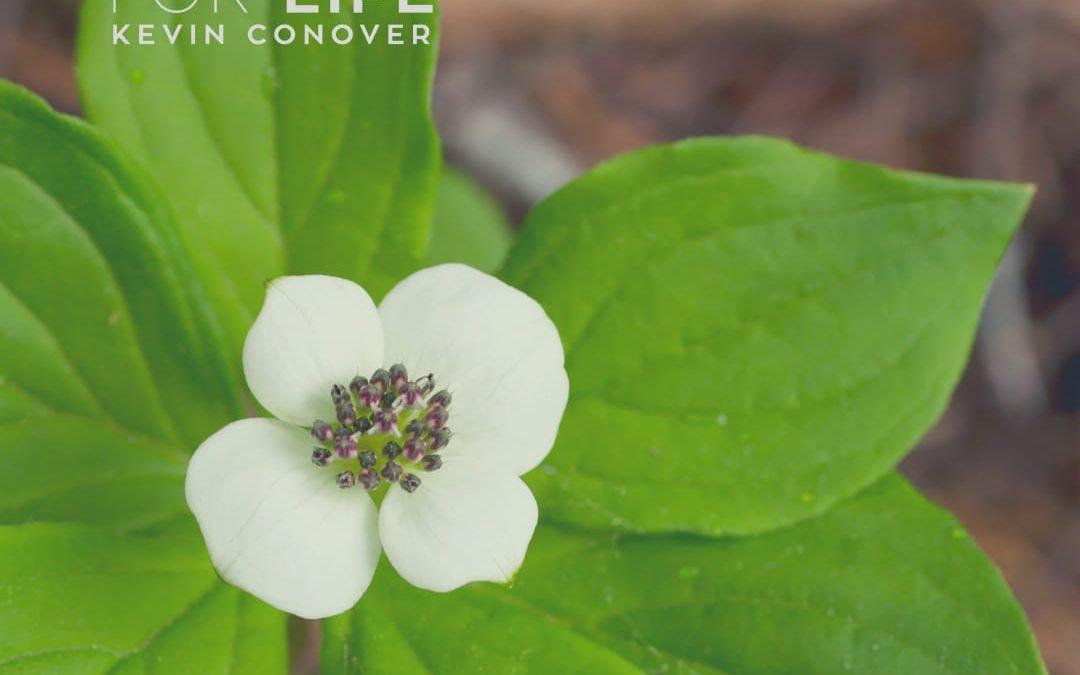 Catapult Flower