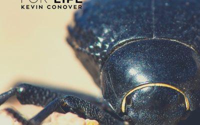 Beetle Bumps