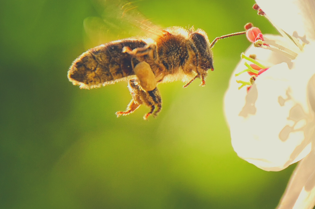 Busy Bees Efficiency