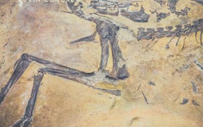 Dinosaur Death Discoveries