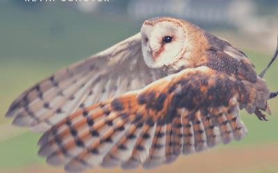 Owls Silent Flight